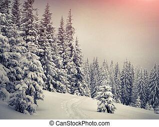 木, カバーされた, ∥で∥, hoarfrost, そして, 雪, 中に, 山