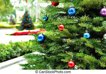 木, クリスマス, 庭