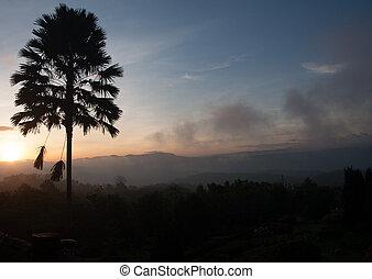 木, シルエット, 日の出, plam