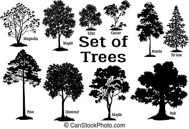 木, シルエット, 松, 黒