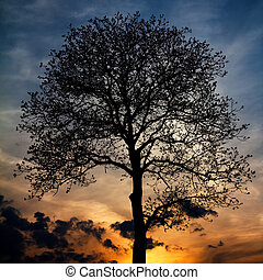 木, シルエット, sunset.