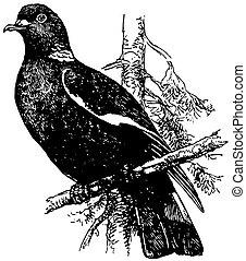 木, ハト, 鳥, 共通
