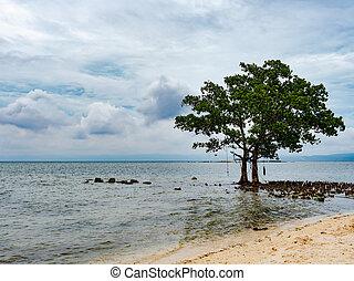 木, フィリピン, 雲
