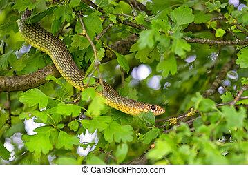 木, ヘビ