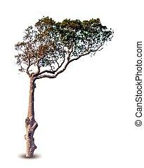 木。, ベクトル, 緑
