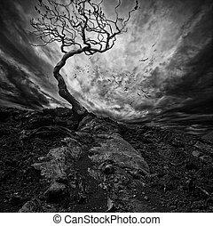 木, 上に, 劇的, 孤独, 空, 古い