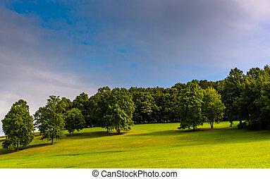 木, 上に, a, 丘, 中に, 田園, ヨーク, 郡, pennsylvania.