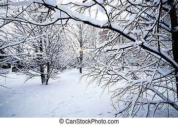 木, 下に, 裸, 冬, 雪
