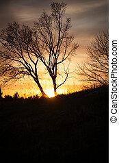 木, 中に, ∥, 日没