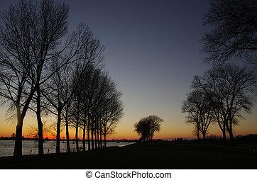 木, 中に, 日没