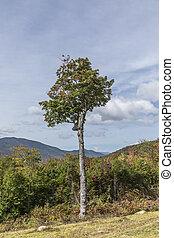 木, 中に, ∥, 白い 山