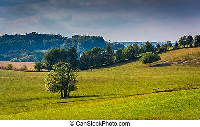 木, 中に, a, フィールド, 中に, 田園, ヨーク, 郡, pennsylvania.