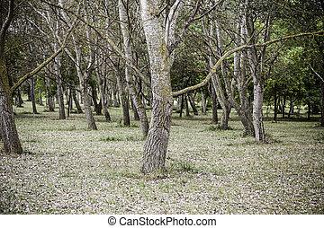 木, 中に, a, 森林