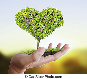 木, 保有物