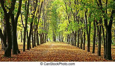 木, 公園, アリー, カラフルである