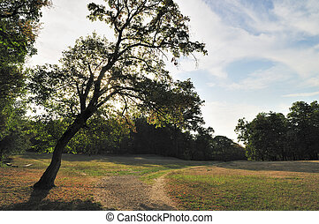 木, 公園