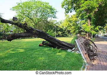木, 公園, 根こそぎにされる