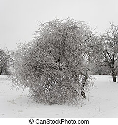 木, 公園, 氷