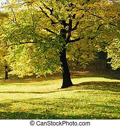 木, 公園, 黄色