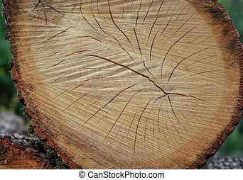 木, 切口, オーク, 手ざわり