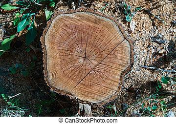 木, 切口, 手ざわり