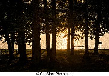 木, 前方へ, ∥, 海岸, の, 湖, pinchot, ∥において∥, 日没, gifford, pinchot,...