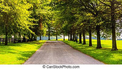 木, 前方へ, a, 田園, backroad, 中に, ヨーク, 郡, pennsylvania.