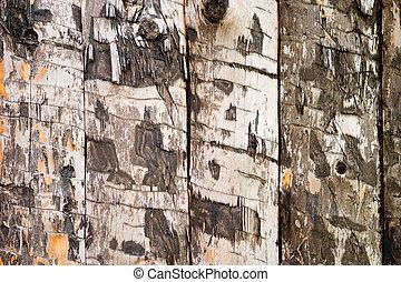木, 厚板, 手ざわり