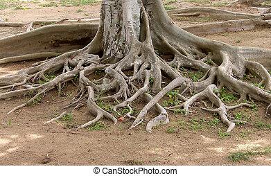木, 古い, 定着する, 大きい