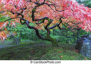 木, 古い, 庭, かえで, 日本語