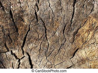 木, 古い, 手ざわり