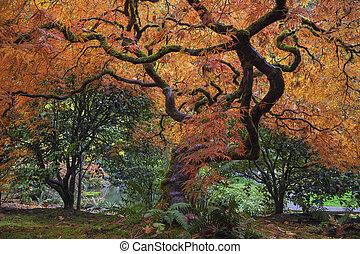 木, 古い, 日本 かえで, 下に