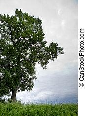 木, 地平線