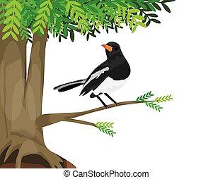 木, 大きい, デザイン, かささぎ, 鳥, ベクトル