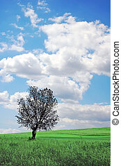 木, 孤独