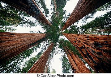 木, 巨人