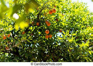 木, 庭, オレンジ