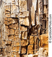 木, 手ざわり