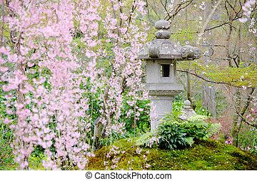 木, 日本の庭, sakura