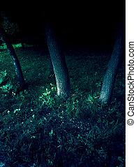 木, 暗やみに