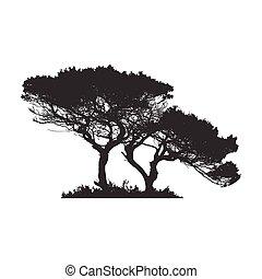 木, 株, アフリカ, イラスト, 隔離された, 白, silhouette., バックグラウンド。, ベクトル