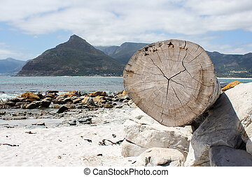 木, 浜, トランク