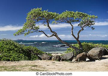 木, 海洋