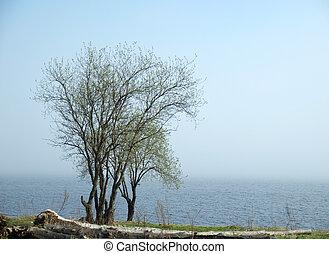 木, 湖, 海岸