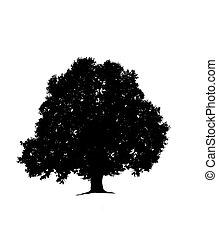 木, 白, シルエット, 古い, 背景, オーク