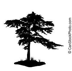 木, 白, シルエット, 隔離された, 背景