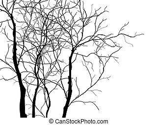 木, 白, ブランチ, 隔離された, 背景