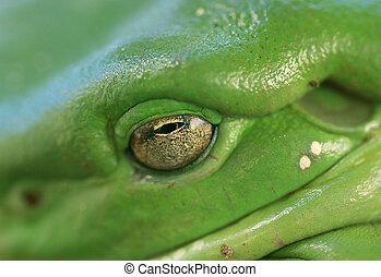 木, 目, カエル, マクロ