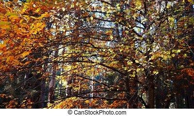 木, 秋, 美しい, 群葉