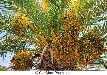 木, 空, トロピカル, やし, 青緑, 日当たりが良い, ココナッツ